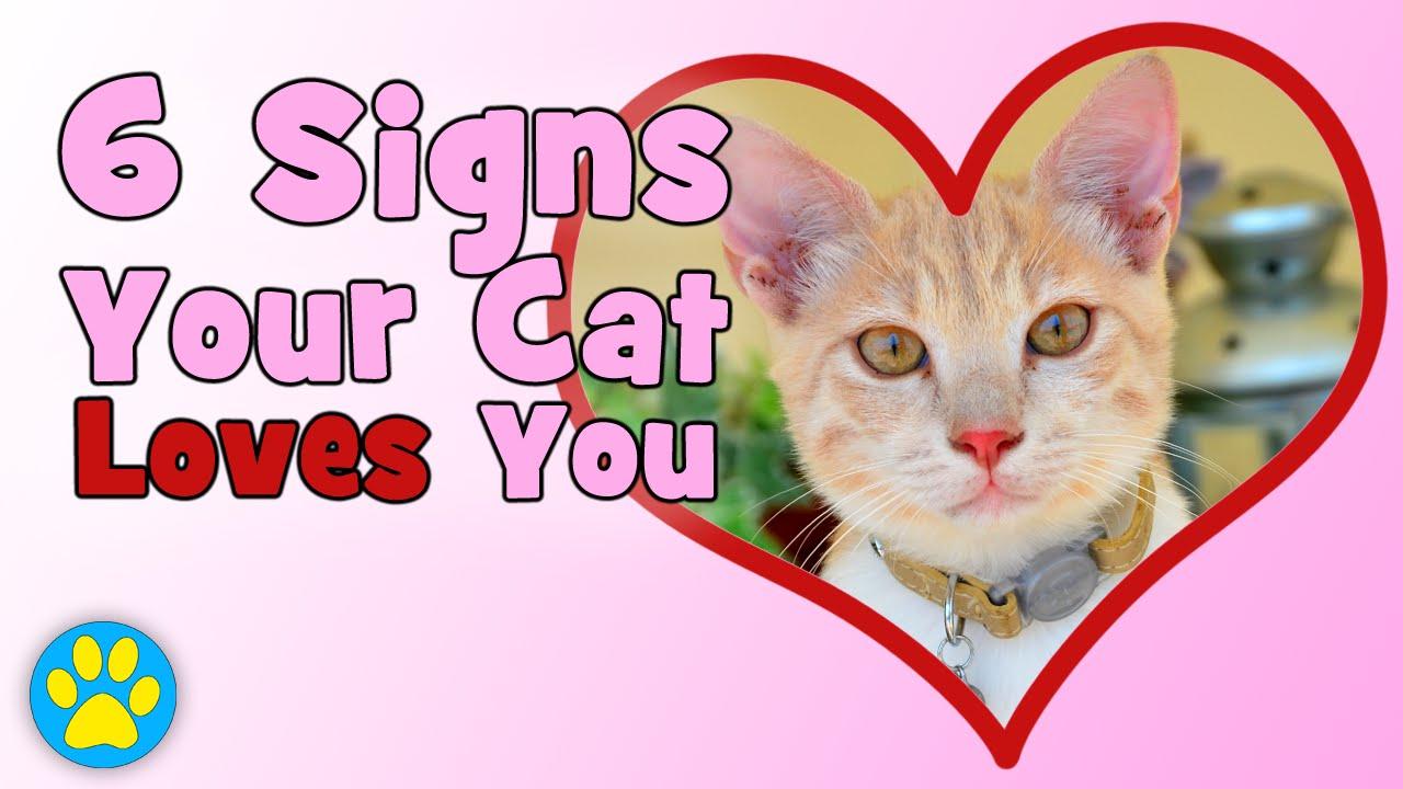 cat with diarrhea