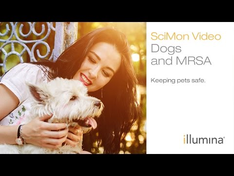 Dogs and MRSA: Keeping pets safe | Illumina SciMon Video