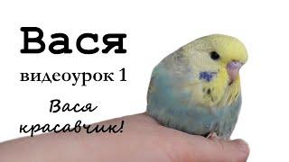 """🎤 Учим попугая говорить, видеоурок: """"Вася красавчик!"""""""