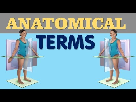 Anatomical Terms - Directional terms , Planes , Regional terms
