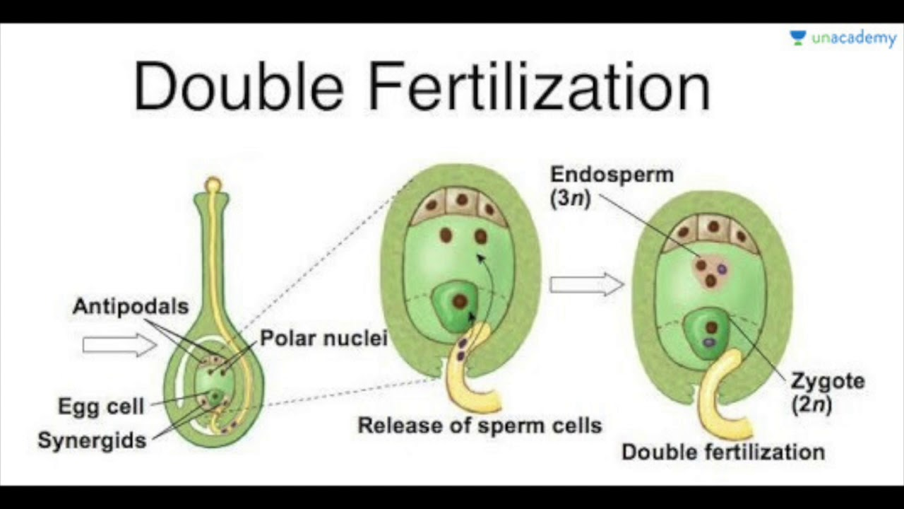 embryo protection in plants - 850×434