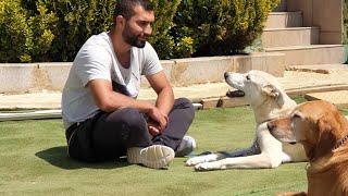 Profesyonel Pozitif Köpek Eğitimi   Sokak Köpeklerinin Eğitimi