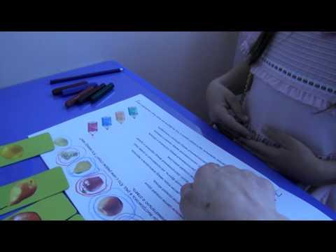 Урок 19 Рабочая тетрадь упр  5 стр  41 ДИКТАНТ