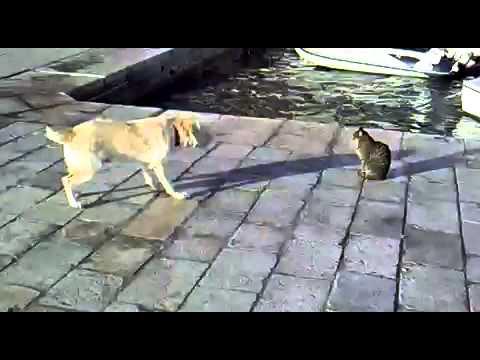 Cat ignores barking dog