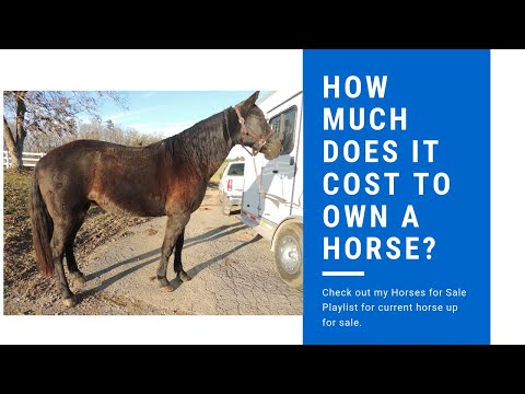How much does it cost to own a horse? - YouTube