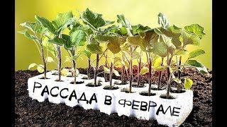 Что посадить на рассаду в феврале? Что посеять из овощей в феврале на рассаду?