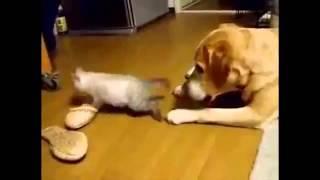 Все коты - засранцы. Классная подборка
