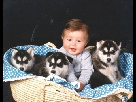Thumbnail: Husky Siberian And Babies Playing Videos Compilation 2016 - Cute Dogs Love Babies