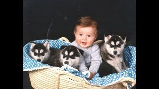 Husky Siberian And Babies Playing Videos Compilation 2016 -  Cute Dogs Love Babies