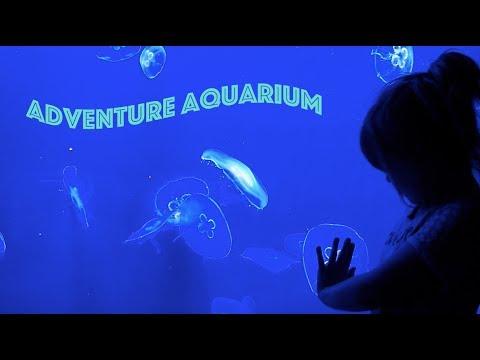 Adventure Aquarium 2017!