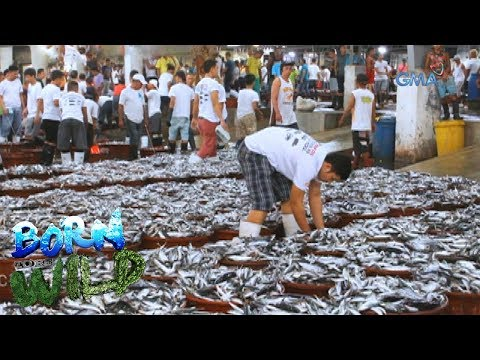 Born To Be Wild: Doc Nielsen Visits The Largest Fish Port In The Philippines