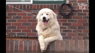 Dog Knows He Is A Celebrity | Kritter Klub