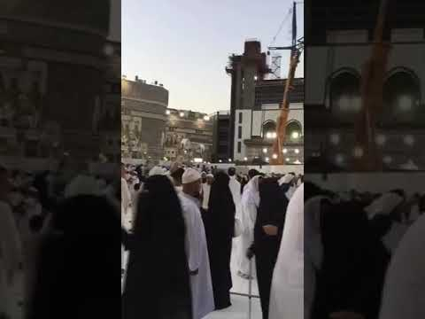Cats Fighting in Haram Shareef Makka Saudi Arabia