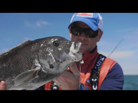 How To Catch Tautog With The Hogy Utility Rig