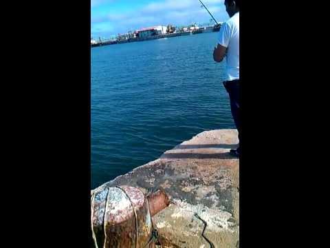 Pesca de barracuda campeche mexico 1 de 2