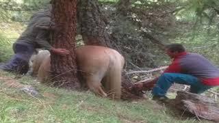 ВИДЕО ДО СЛЁЗ Спасение лошади СПАСЕНИЕ ЖИВОТНЫХ Очень трогательное видео #СПАСЕНИЕЖИВОТНЫХ