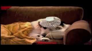 Video Avery Vs. Teacher - Dog With A Blog - Season 3 Episode 5 promo - G Hannelius download MP3, 3GP, MP4, WEBM, AVI, FLV Maret 2018