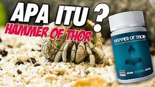 WA 082313111123 - Untuk Pria Dewasa Hammer Of Thor Obat Kuat Tahan Lama Asli Dan Original