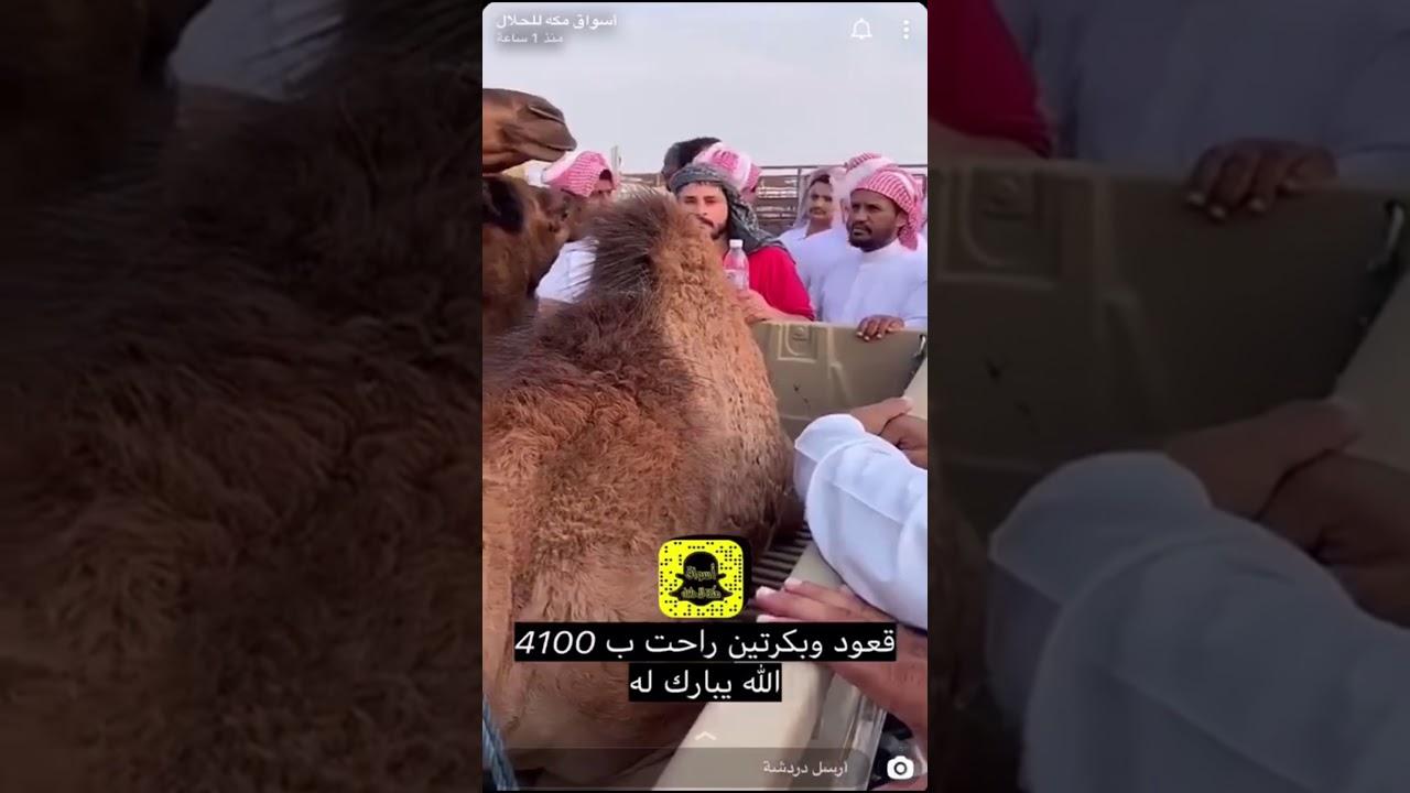 تغطية حراج سوق العواجي 1441 03 09هـ Youtube