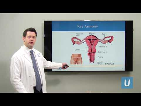 What Is Cervical
