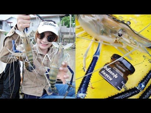 วิธีตกกุ้งก้ามกราม แม่น้ำบางปะกง ( Prawn fishing in Bang Pakong River)