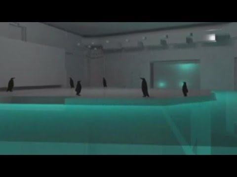 Albuquerque BioPark gives first look at new penguin exhibit