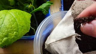 Adding Worms To my Aquaponics system