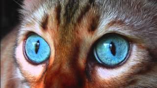 Смешные кошки - как поют смешные кошки