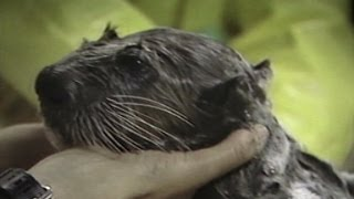 Exxon Valdez oil spill harmed wildlife