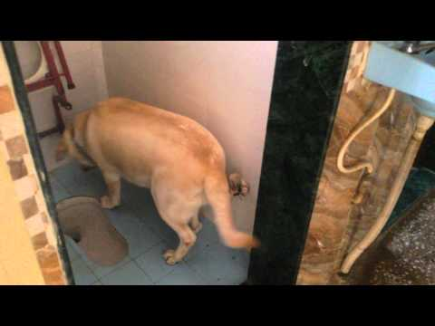 How to use Dog Toilet. ...Dolly