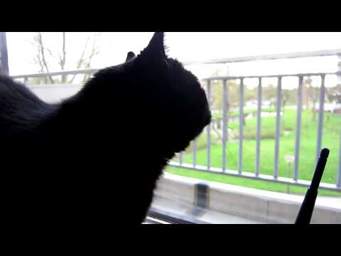 "Thumbnail: Our black cat making ""hunting sounds"" at the sight of birds"