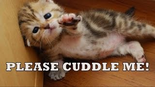 Cutest Animals in the World Compilation By Fail Filter
