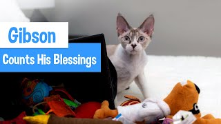 Sweet Cat Counts His Blessings