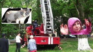 Шок! Пожарные спасли умирающую кошку! Спасение кошки от смерти Видео о кошке, про кошек