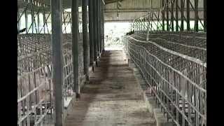 Prohibición de importación aves y huevos hacia Haití preocupa a productores en Santiago
