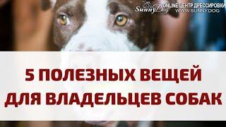 Топ 5 полезных вещей, которые сильно облегчают жизнь владельцам собак