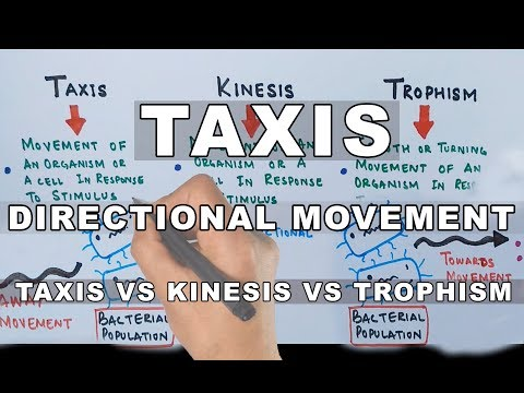 Taxis | Directional Movement In Organisms
