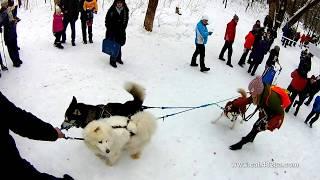 10 часть, #Winterdogfest Winter dog fest 2019, Харьков, Лесопарк, 02022019, собаки