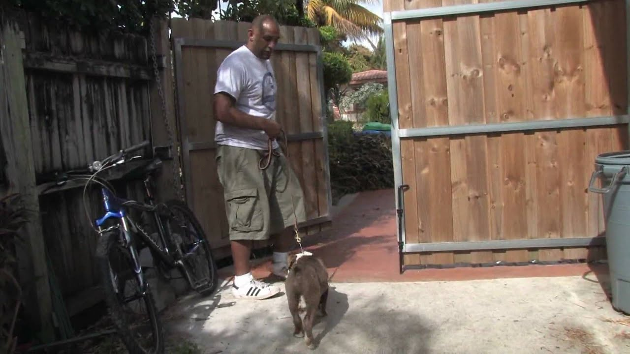 Best Way To Train Dog To Stay In Yard