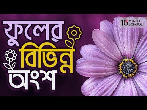 15. অধ্যায় ৭ - ফুলের বিভিন্ন অংশ (Different parts of a flower) [HSC | Admission]