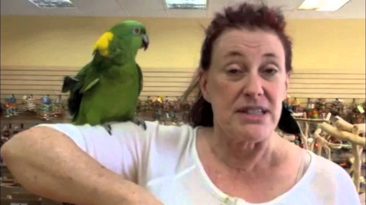 Parrot Planet coming to East Sacramento