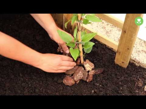 Holzterrasse bauen | HORNBACH Meisterschmiede from YouTube · Duration:  13 minutes 16 seconds