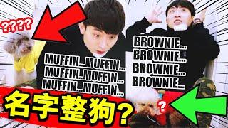 【🐶整蠱】假裝看不見狗狗,卻一直「喊牠的名字」😂...看見主人爆哭,MUFFIN BROWNIE竟是這反應❓(中字)