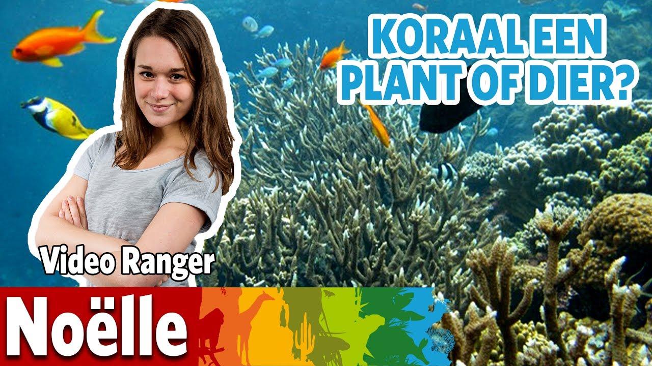 Zijn koralen planten of dieren?