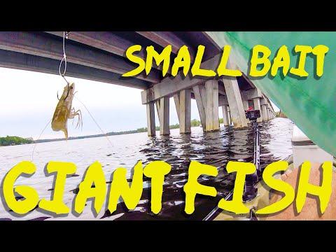 Landing Bridge Giants From The Kayak - Destin Kayak Fishing