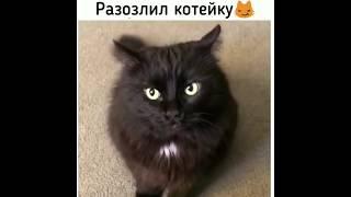 НОВЫЕ смешные ПРИКОЛЫ про животных 2019 ...