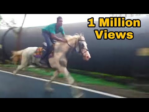 Horse Running On Road V  Fast