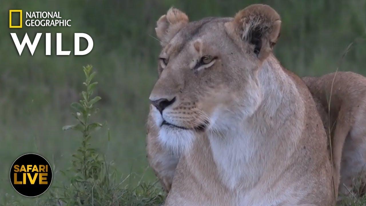 Safari Live - Day 286 | Nat Geo Wild