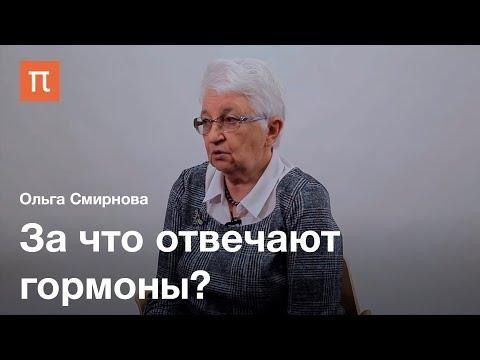 Эндокринология как наука — Ольга Смирнова / ПостНаука