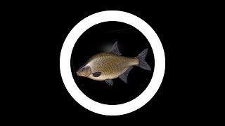 Рыбалка на озере Ставим экранчики 1Часть